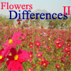 Flowers Differences 2